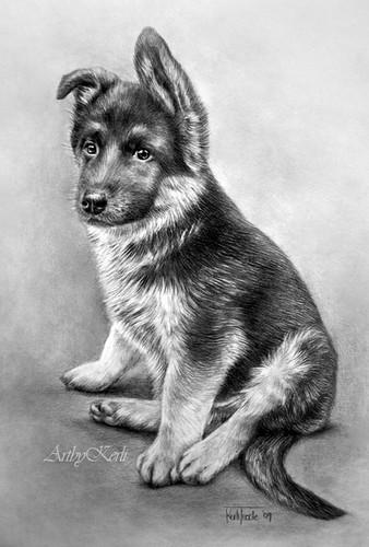dog breeds under 25 pounds most obedient dog breeds medium dog breeds ...