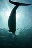 Photo:20090812 Notojima Aquarium 8 (Under the sun) By BONGURI