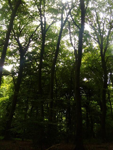 Cosgrove Woods
