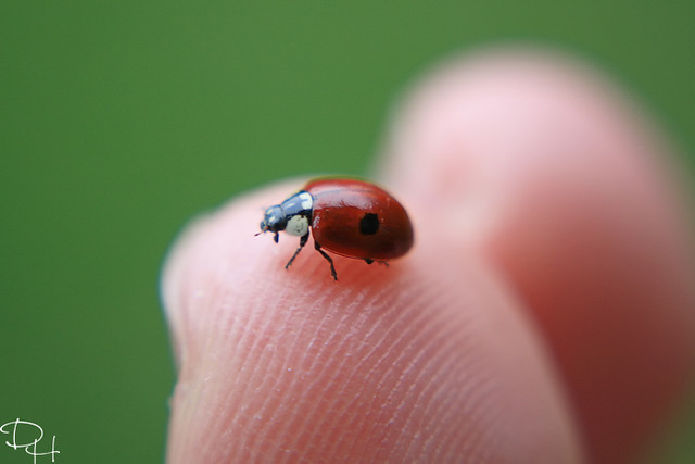Ladybug or ladybird??