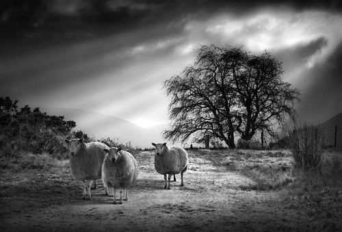 landscape sheep biblical godrays corpuscularrays