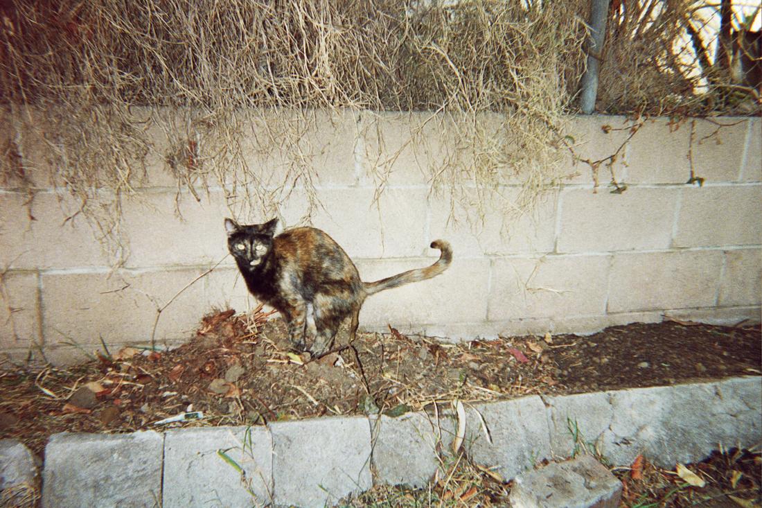Problemi tra gatti e vicini di casa
