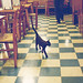 The stray cat in the ice cream parlor.