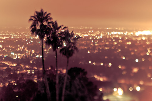 city summer lights three bokeh palmtrees heat csf urbansunset