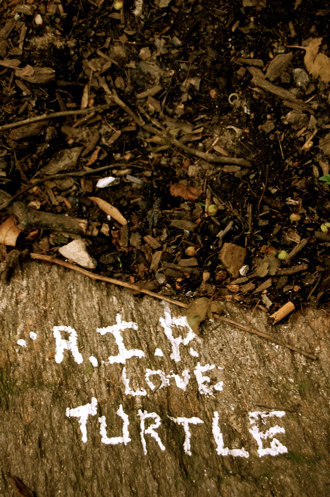 RIP Love Turtle | Taken in Central Park  The meaning is unkn