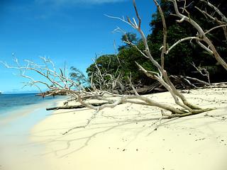 Sand Tree