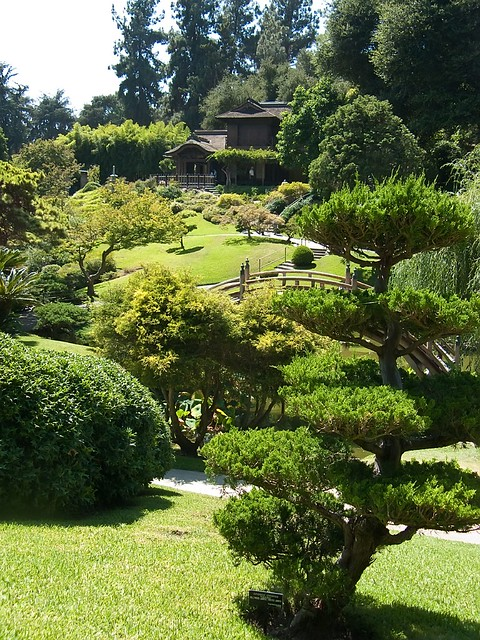Artisticly Pruned Trees In Japanese Garden At Huntington