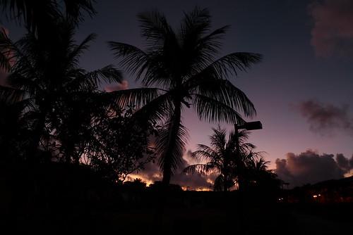 blue silhouette sunrise purple earlymorning palm gradation 青 saipan サイパン 紫 シルエット 日の出 ヤシ グラデーション 早朝 lx3 coraloceanpoint コーラルオーシャンポイント