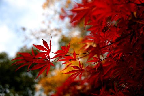 Mizumoto Park Autumn Leaves - 03