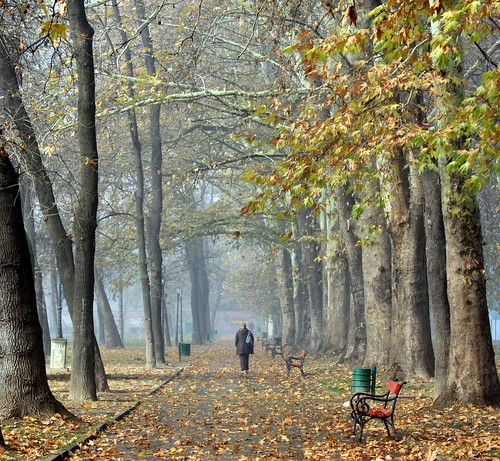 park autumn fall nature canon bench landscape explore macedonia есен citypark skopje парк gradskipark esen македонија mywinners скопје градскипарк canon1000d cuckove