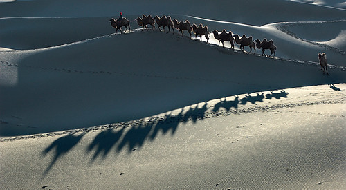 2378 Camel train--The Silk Road , China