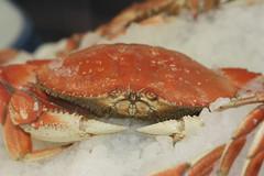 fish(0.0), king crab(0.0), crab(1.0), animal(1.0), shellfish(1.0), crustacean(1.0), seafood(1.0), invertebrate(1.0), dungeness crab(1.0), fauna(1.0), food(1.0),