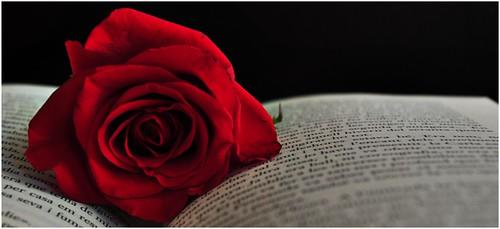 La rosa i el llibre