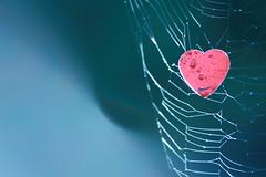 [フリー画像素材] バックグラウンド, ハート, クモの巣・糸 ID:201201090800