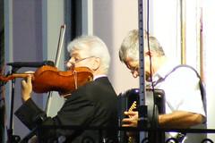 bowed string instrument, string instrument, musician, violin, music, fiddle, string instrument,