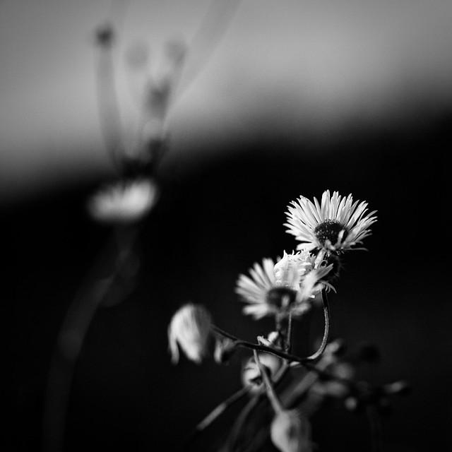 Square Black & Flower