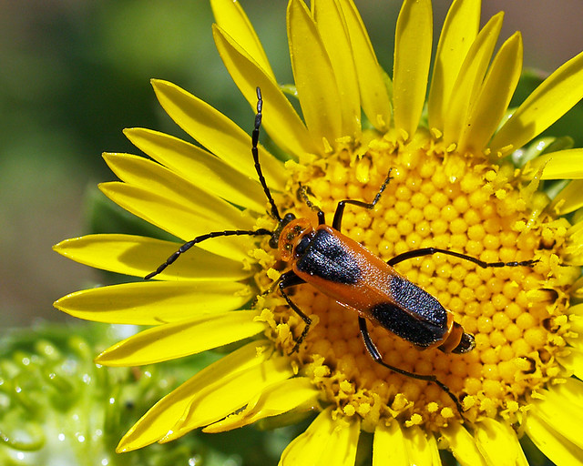 Examples of mutualism in nature