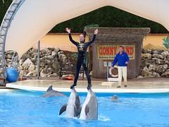 在瑞典的海豚表演活動(Vivek Maswadkar攝)。
