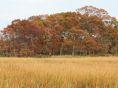 autumn ny newyork color fall nature rye marsh saltmarsh bej abigfave marshlandsconservancy diamondclassphotographer flickrdiamond theperfectphotographer