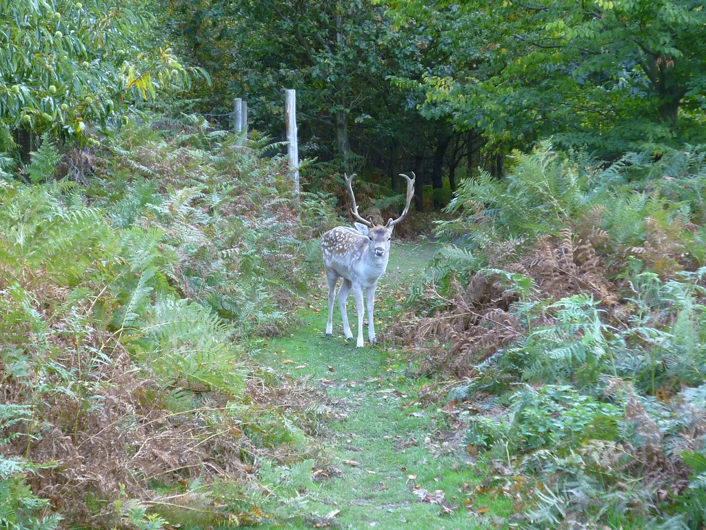 Knole Park Time Out Country Walks. Sevenoaks Circrular. Walk 21