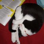 irrational kitten
