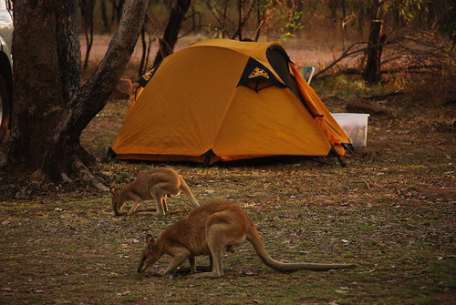 Camping at Katherine Gorge
