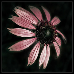 Flower 0709_2