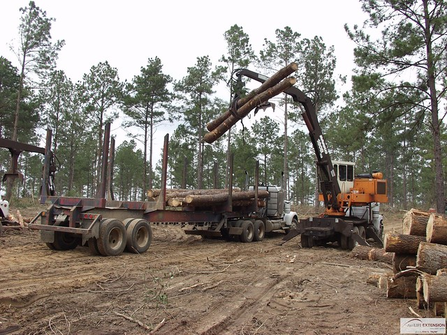 timber harvesting Timber harvesting idc manages three integrated forestry management areas (ifmas) areas within northern aurora province employing more than 1,000 people from the surrounding communities to maintain, protect, and conserve the forests.