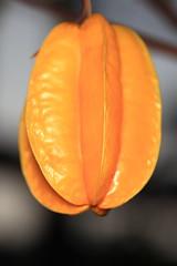 Star Fruit / Averrhoa carambola / 五歛子(ゴレンシ)