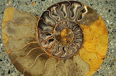 carving(0.0), flower(0.0), leaf(0.0), metal(0.0), yellow(1.0), fossil(1.0),