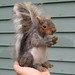 COMMISSIONED SQUIRREL SCULPTURE~MS WEBSTER~NEEDLE FELTED by GOURMET FELTED by Gourmet Felted