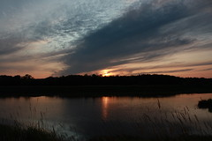 McFadden Marsh