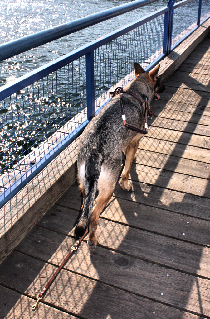 RUNAWAY GUIDE DOG