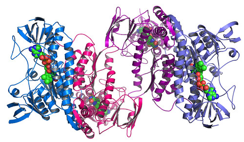Argonne's Midwest Center for Structural Genomics deposits 1,000th protein structure