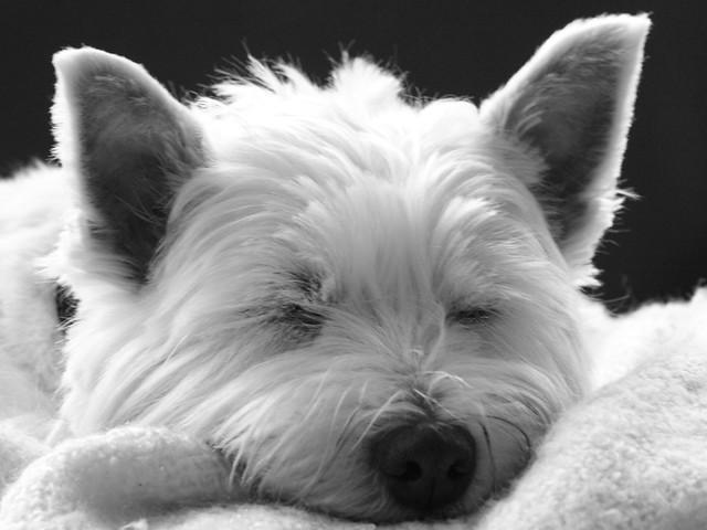 Sleeping Dogs Background