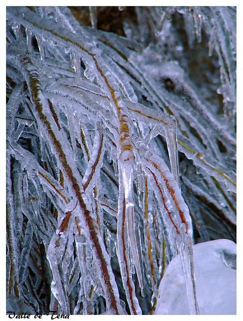 Unas ramas congeladas