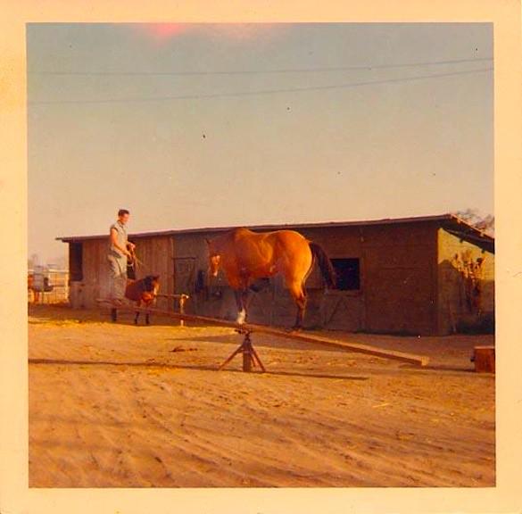 1960s VINTAGE UNUSUAL HORSE CIRCUS PERFORMER DANCER PHOTO