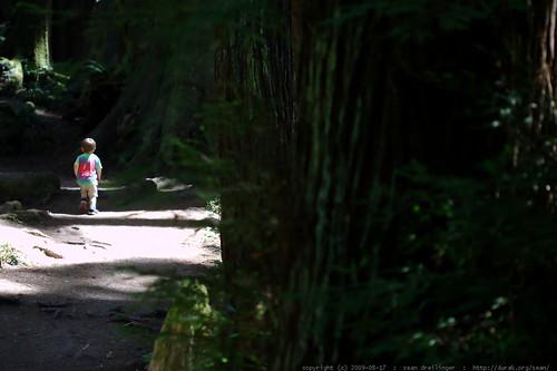 walking in the humboldt redwoods    MG 1027