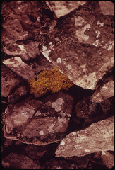 Caribou Lichen Growing in the Talus at the Foot of Peak 5308 Common to All Alpine and Arctic Environments Along the Route 08/1973