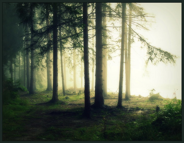 Charmed forest....special for you my dear Visitors!