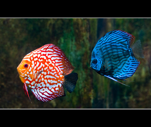 One fish two fish red fish blue fish a photo on flickriver for Red fish blue fish