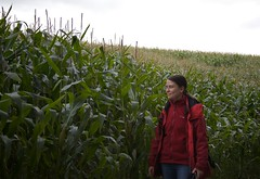 agriculture, farm, field, maize, crop, rural area, plantation,