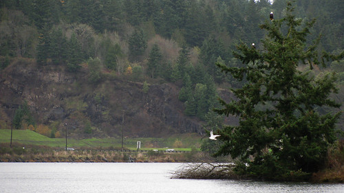eagle sinclairinlet