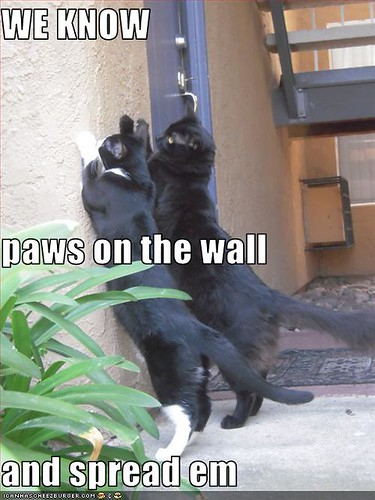 funny-pictures-cats-are-getting-arrested