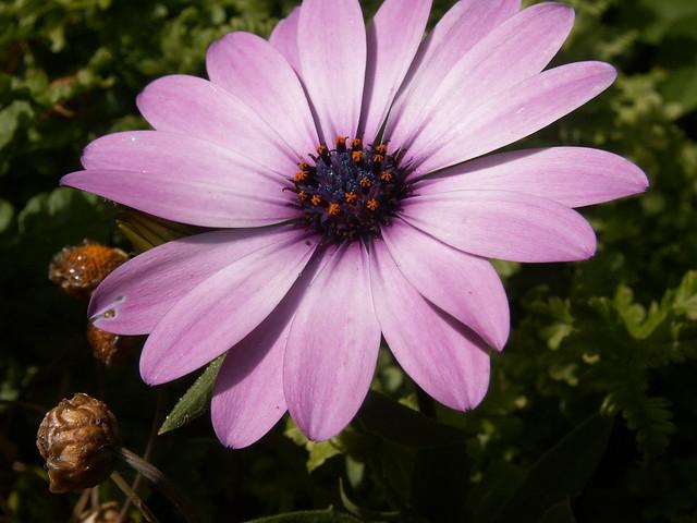 Header of A Flower
