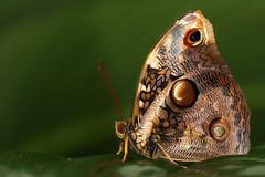 Jardin des papillons - Grevenmacher - Luxembourg