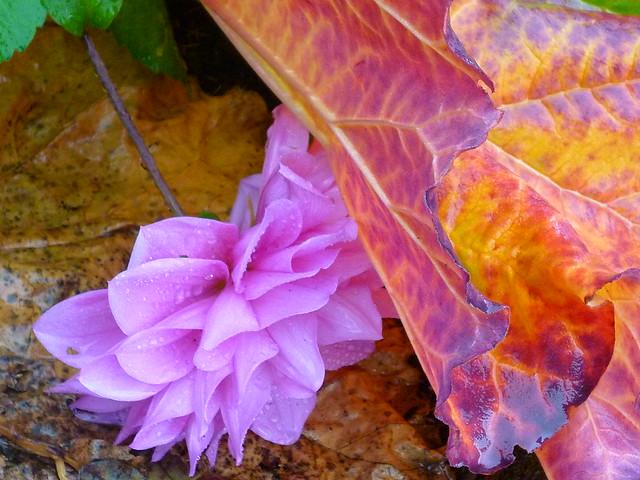pink, purple, green, leafy