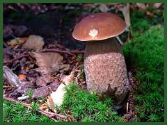pilze mushrooms funghi champion a set on flickr. Black Bedroom Furniture Sets. Home Design Ideas