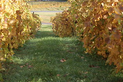 Bluemont Vineyard Vines 1