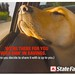 Advertising - State Farm Insurance, Labrador